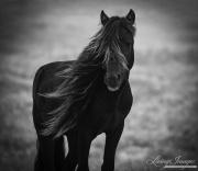 fineart-251-SableStallionPortrait