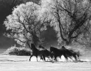 fineart-062-SnowySilhouetteI