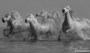 fineart-156-WhiteHorsesSplashing