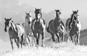 fineart-010-HorsesCresttheHill