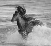 Ojai, California, Andalusian stallion, ocean