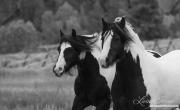 fineart-078-TwoGypsiesRun