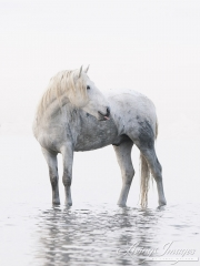 fineartcolor-140-TheWhiteHorsewiththePinkTongue