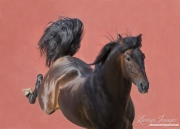 fineartcolor-072-TheStallion and the RedWallII