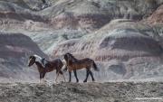 fineartcolor-091-RedCliffsandWildHorses