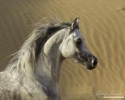 fineartcolor-098-DesertStallionAgainsttheDunes