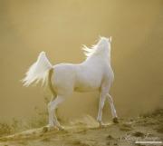 fineartcolor-099-DesertStallionatSunset