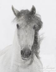 fineartcolor-103-SnowyMare