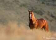 fineartcolor-134-SunriseStallion