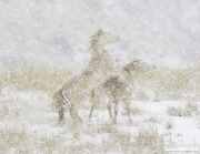 fineartcolor-136-SnowDayfortheMustangs