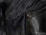 fineartcolor-164-CaballoNegrosEye