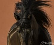 fineartcolor-167-TheStallionandtheRedWallIII