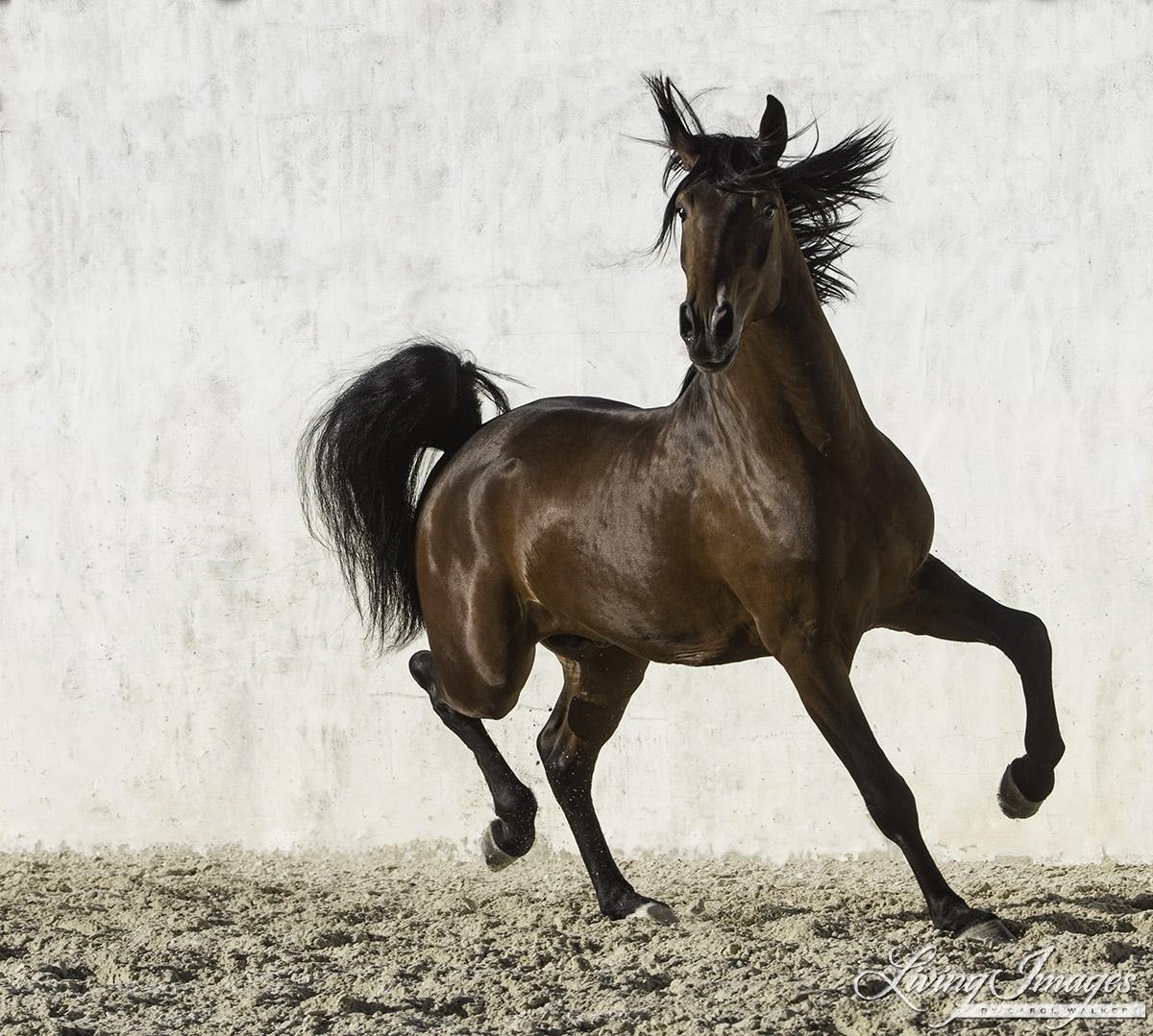 аэропорту картинки конь танцует этой статье проследим