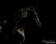 fineartcolor-344-StallionsDarkProfileII