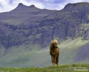 fineartcolor-411-MountainStallion