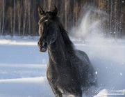 fineartcolor387-SnowyPlunge