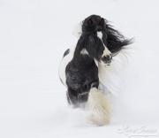 fineartcolor388-SnowGypsy