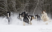 fineartcolor393-SnowyGypsiesRunning