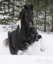 fineartcolor396-SnowyLeap