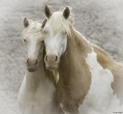fineartcolor308-Cheyenne'sGirl