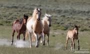 FineArtColor-424-FoalLeadstheWay