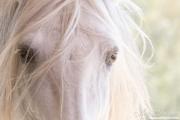 fineartcolor-430-WhiteStallionsEyes