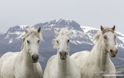 fineartcolor-046-ThreeMountainHorses
