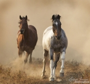 fineartcolor-056-TwoHorsesRunThroughtheDust