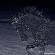 fineartcolor-221-MidnightCloud