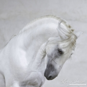 fineartcolor-223-WhiteSpanishStallion