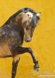 fineartcolor-042-ProudLusitanoStallion