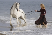 purebred Grey Arabian stallion in the surf with owner in Ojai, CA