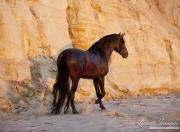 Ojai, California, Andalusian stallion, cliff