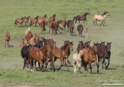 Quarter Horse mares and Azteca foals and tow year olds in Blair, Nebraska
