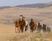 ranch horses on a ranch in Martinsdale, Montana
