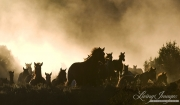 Cowboy drives Quarter Horse mares and foals run in dust, San Cristobal Ranch, NM