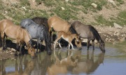Wild Horses 2012