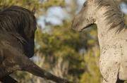 Pryor Mountains, Montana, wild horses, two stallion, one strikes out