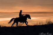 Flitner Ranch, Shell, WY, horses in winter, cowboy running his horse at sunset