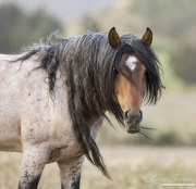 mustang stallion at Return to Freedom Sanctuary in Lompoc, CA