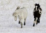 SnowHorses-112