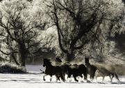 SnowHorses-160
