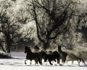 SnowHorses-162