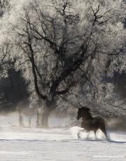 SnowHorses-164