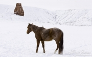 SnowHorses-168