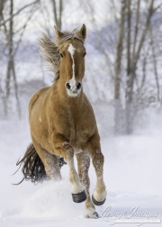 SnowHorses-184