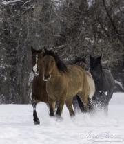 SnowHorses-185