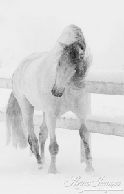 SnowHorses-194