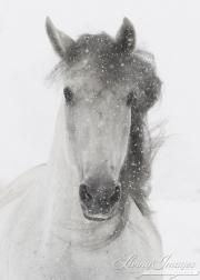 SnowHorses-195