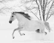 SnowHorses-197